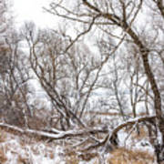 Winter Woods On A Stormy Day 2 Poster