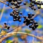 Winterberries II Poster