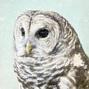 Winters Owl, Barred Hoot Owl Winter Snow Falling Poster