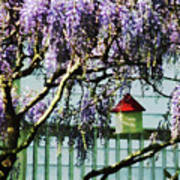 Wisteria And Birdhouse Poster