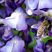 Wisteria Bee Poster