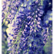 Wisteria Whimsy Poster