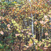 Witch Hazel Forest Poster