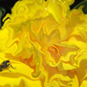 Wohlfahrtia And Begonia Poster