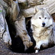 Wolf Den 1 Poster