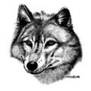 Wolf In Pencil Poster