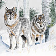 Wolves In The Birch Trees  Poster