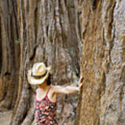Woman Leaning On Giant Sequoia Tree Poster