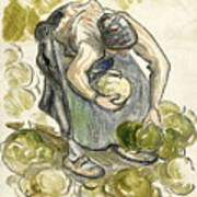 Woman Picking Cabbage Poster