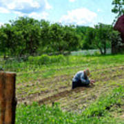 Woman Planting Garden Near Barn Poster