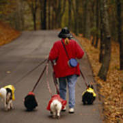 Woman Walks Her Army Of Dogs Dressed Poster