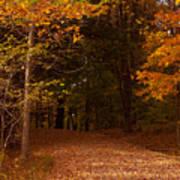 Wonderful Fall Colors Poster by Robert  Torkomian