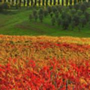 Wonderful Tuscany, Italy - 07  Poster