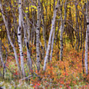 Wonderful Woods Wonderland Poster