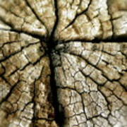 Wood Cross Poster by Tina Valvano