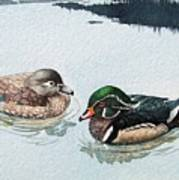 Wood Ducks Poster