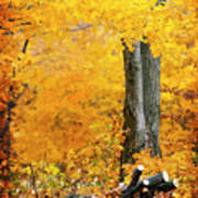Wood Pile In Autumn Poster