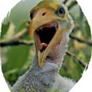 Wood Stork Nestling Poster