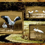 Wood Storks Of Oak Grove Island Poster
