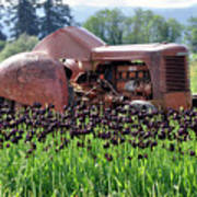 Woodburn Oregon - Tractor And Field Of Tulips Poster