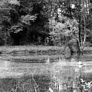Wooded Pond Poster