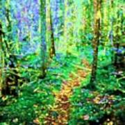Wooded Trail Poster