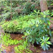 Woodland Stream Forest Interior Poster