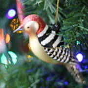 Woodpecker Ornament Poster