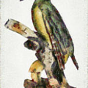 Woodpecker Red Heads Poster
