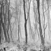 Woods In Mist, Stagshaw Common Poster