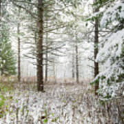 Woods In Winter At Retzer Nature Center  Poster