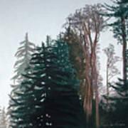 Woods Mist Poster by Lucinda  Hansen