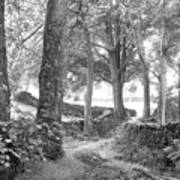 Woods, Troutbeck, Windermere Poster