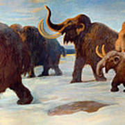 Wooly Mammoths Near The Somme River Poster