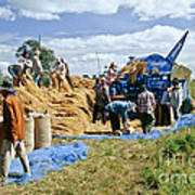 Workers Loading Rice Poster