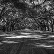 Wormsloe Plantation 2 Live Oak Avenue Art Poster