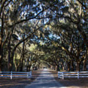 Wormsloe Avenue #2 Poster