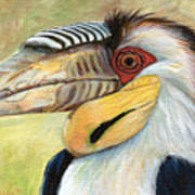 Wreathed Hornbill  Poster