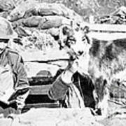 Wwi, Nell British Messenger Dog Poster