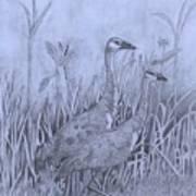 Wyoming Sandhill Cranes Poster