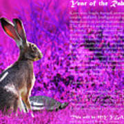 Year Of The Rabbit 2011 . Magenta Poster