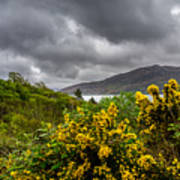 Yellow Flowers And Grey Clouds, Stormy Weather Over Sea In Scotland. Poster
