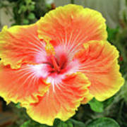 Yellow And Orange Hibiscus 2 Poster