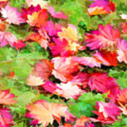 Yellow And Red Fall Maple Leaves Poster