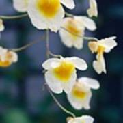 Yellow And White Cascading Flowers Poster