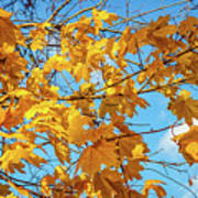 Yellow Autumn Leaves 2 Poster
