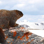 Yellow-bellied Marmot Enjoying The Mountain View Poster
