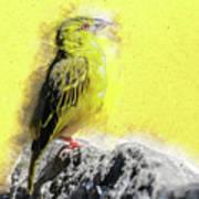 Yellow Bird Poster
