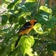 Orange Bird Poster
