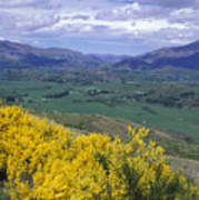 Yellow Broom Over Pasture In Dalefield Poster
